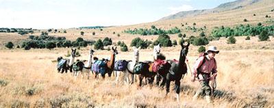 Burns Llama Trailblazers Image